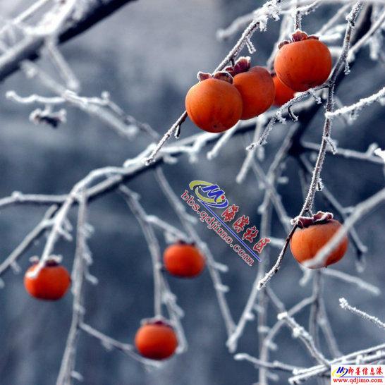正月十二免门票特价350元云台山景区,看绝世冰瀑奇观 - 785304244 - 秀水(即墨)登山俱乐部